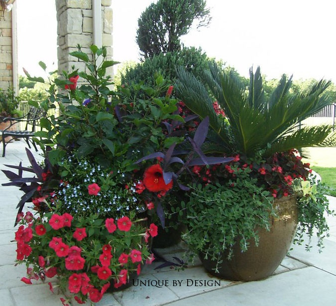 South Florida Tropical Landscape Ideas Planter Container: 17 Best Images About Palm Container Garden On Pinterest