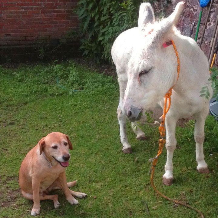 C'era una volta un taglialegna proprietario di un cane e di un asino. Un giorno l'uomo viaggiò attraverso un bosco con il suo cane e il suo asino lungo un cammino era assai faticoso. A un certo punto della giornata il taglialegna si fermò in una radura all'ombra di un faggio, dove si...