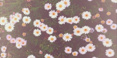 Daisies Twitter Header :) x | Too cool | Pinterest | X ...