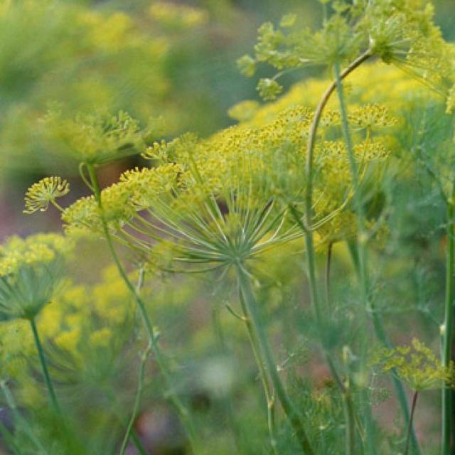 23 Best Images About Companion Plants On Pinterest 400 x 300
