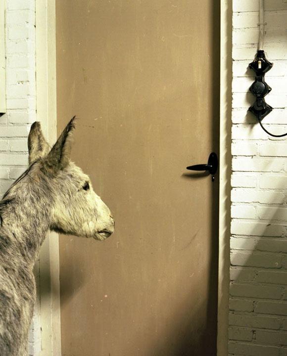 Danielle Van Ark,  The Mounted Life