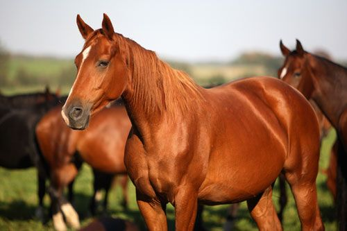 Horse back riding :)