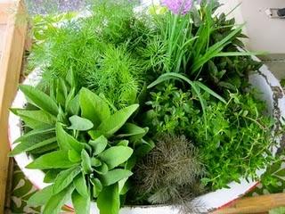 Herbs.