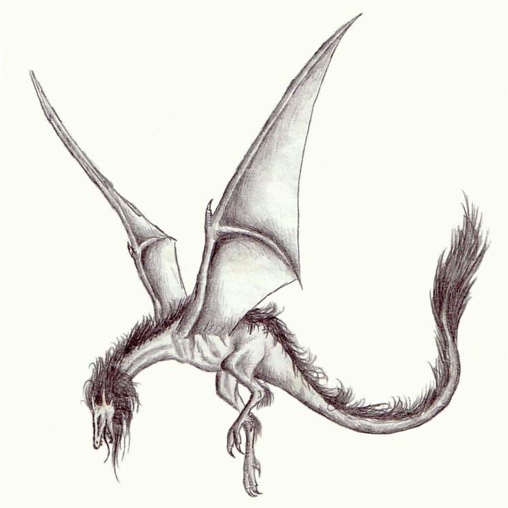 Wyvern: I drew a draggy. ;) by Heather Lennox