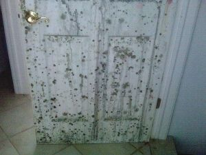 smell from wood panel walls remove mold wood paneling and basements