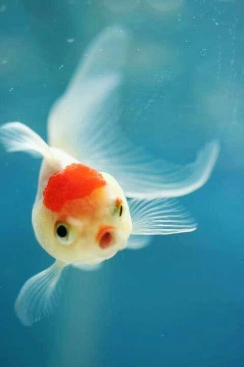 Betta Fish Make A Great Family Pet Hobby
