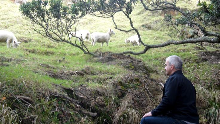 Waldo the shepherd on Mount Maunganui.