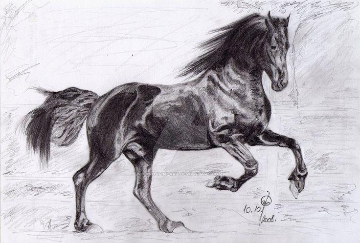 The Friesian by karogfineart.deviantart.com on @DeviantArt