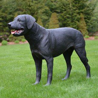 """Life size Black Labrador dog statue stands over 15 inches high.  This realistic portrait of the Black Labrador stands poised to please.  Made of chip resistant fiberglass for indoor or outdoor use. Item # 49055 Price: $279.00 Yab Designs Collection Dimensions:  45""""L 11""""W 30""""H"""