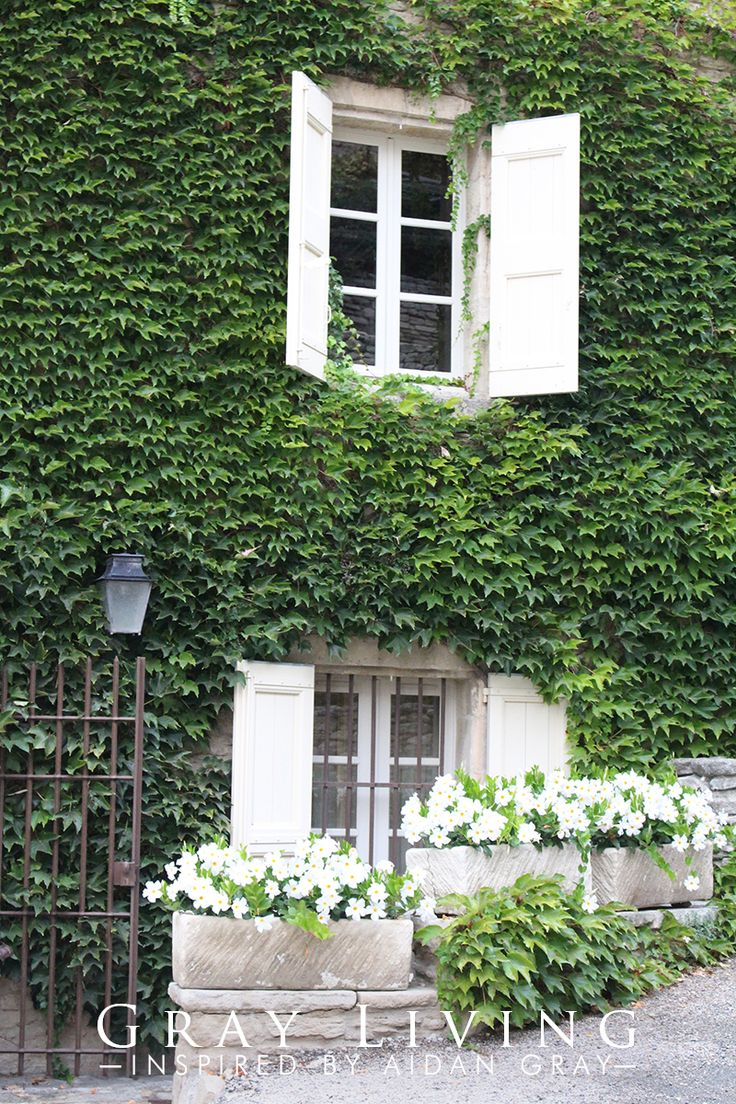 17 Best Images About Fig Ivy On Pinterest Gardens