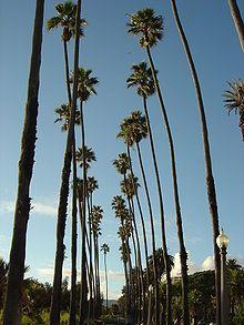 palm trees, california, beach, sun, fun, mall