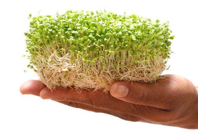 Alimento superior . Brotes y germen: Como hacer germinados y porque es bueno comerlos
