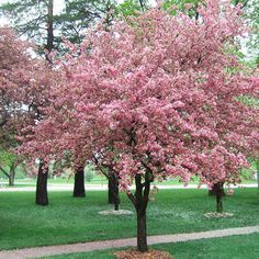 When it comes to articles on the best trees for your yard, this one is the best. We'll show you how to pick ones that will work well in your front yard and backyard in this helpful video. This also includes the best ornamental trees, shade trees, and conifers for your yard.