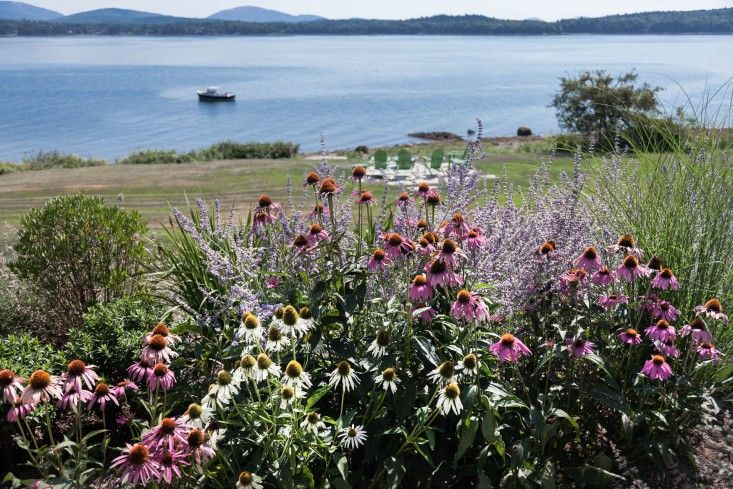 32-Matthew-Cunningham-Landscape-Design-Clamshell-Alley-echinacia-perennials-maine-gardenista