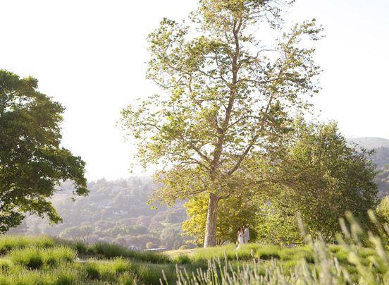 Luxury Hotels In Monterey Carmel Valley Ranch Gallery Pet Friendly