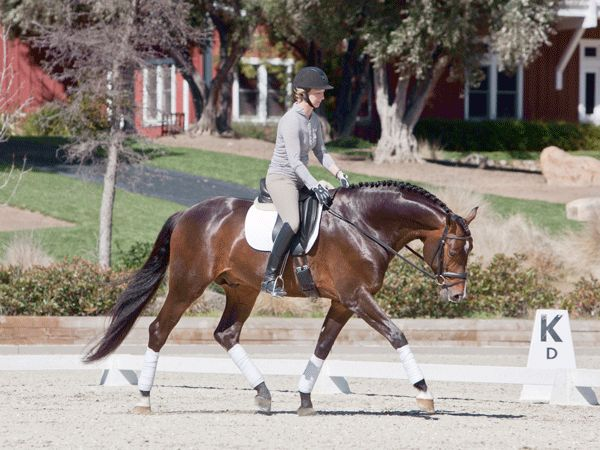 How Do I Encourage My Horse to Stretch?