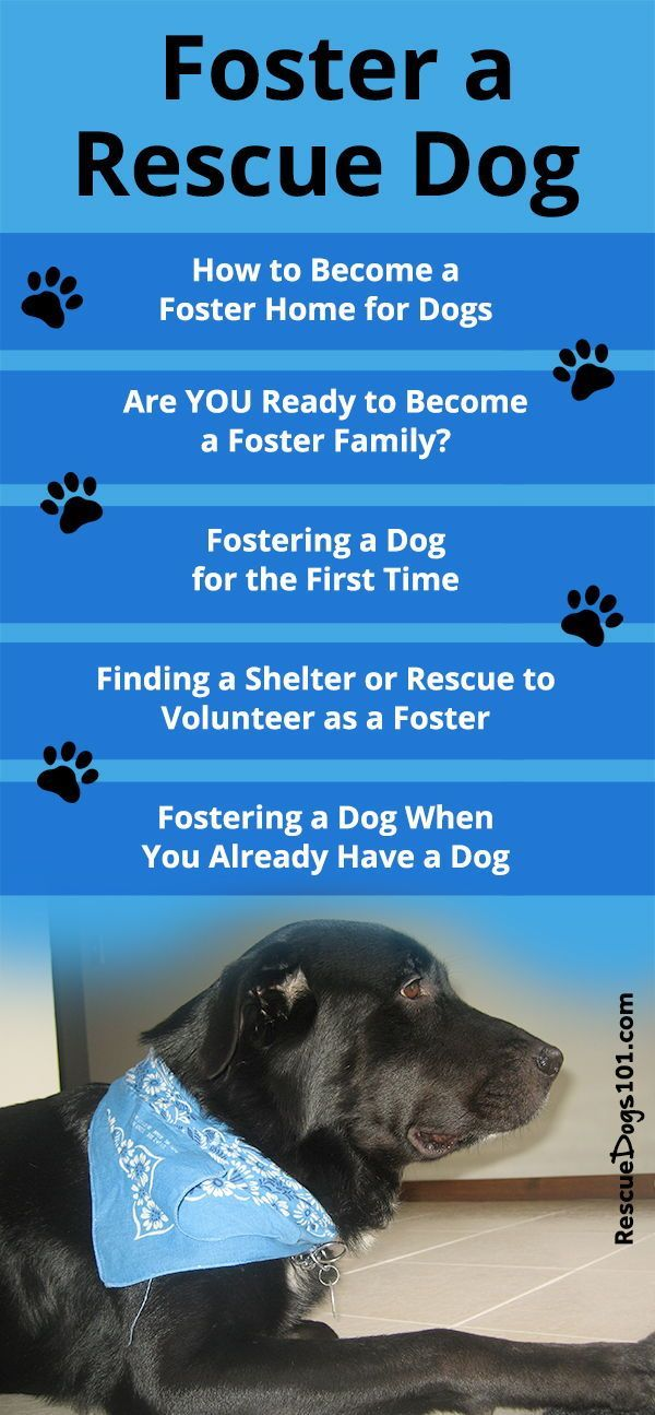 How To Foster A Dog Rescue Dogs Puppy Care Dog Care