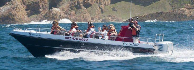 Whale watching eco-safari trips, through the 'Heads' ... trips run twice a day