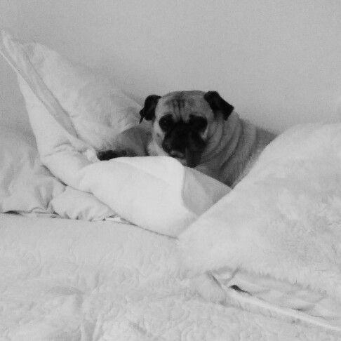 Descansando ... En blanco y negro