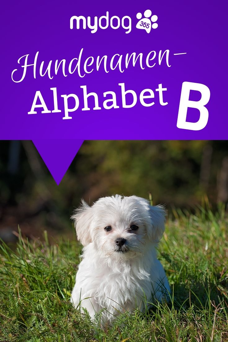 Hundenamen Mit B In 2020 Hundenamen Hunde