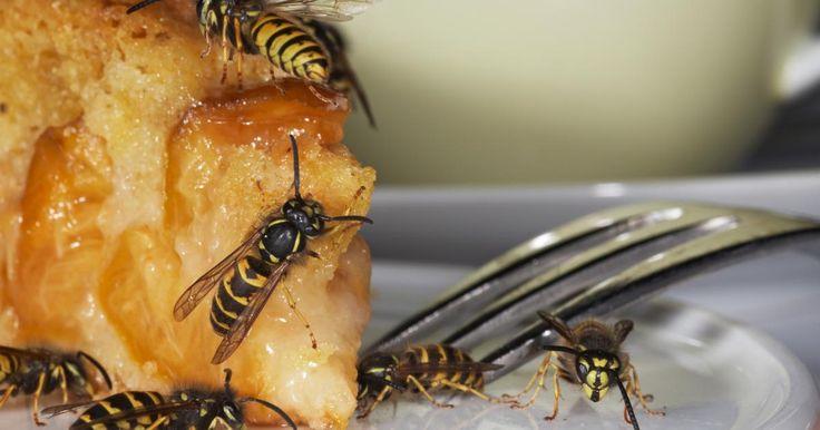 Fabulous Wespen vertreiben Die besten Mittel gegen die Insekten DAS HAUS Ungezieferbek mpfung Pinterest