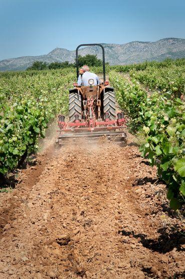 Labour de la vigne du Domaine RETY