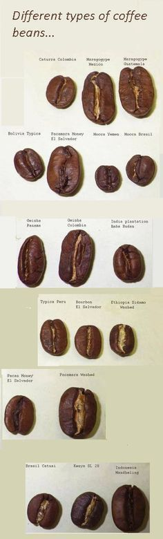 What are the different types of coffee beans. Does the type of coffee bean you choose to brew really make a difference? #makecoffee