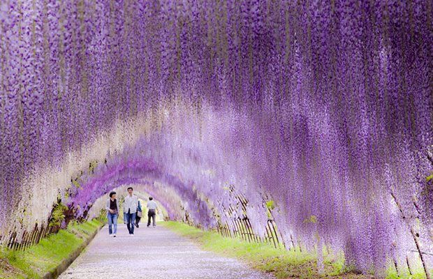 wow!Purple <3
