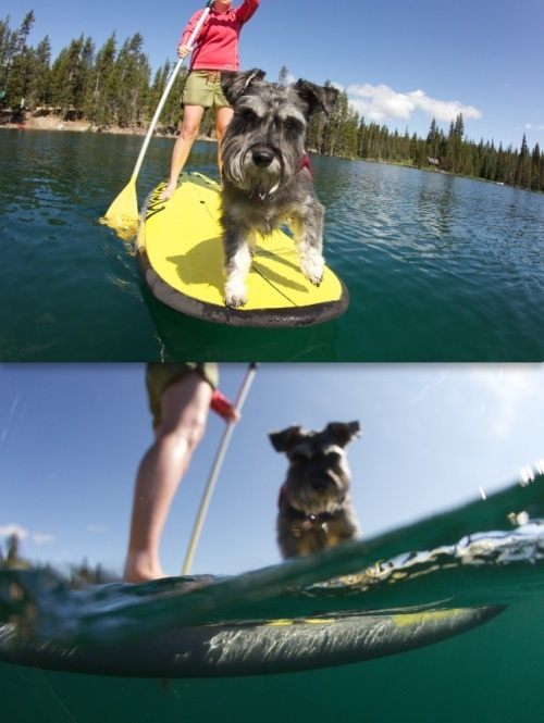 Learning to Paddleboard with Your Pup