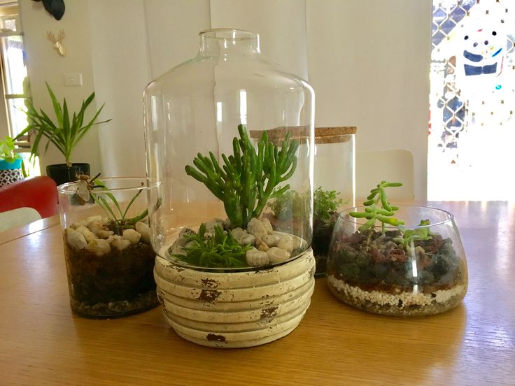 This terrarium was made by my son and it looks great displayed on the dining table
