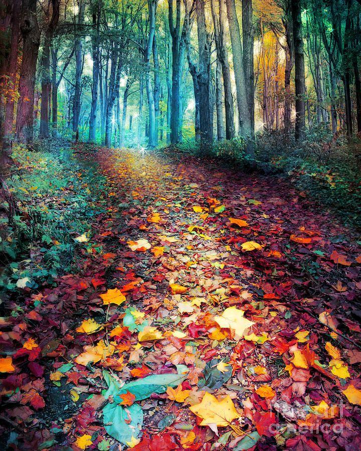 ✯ Where Leaves Gather