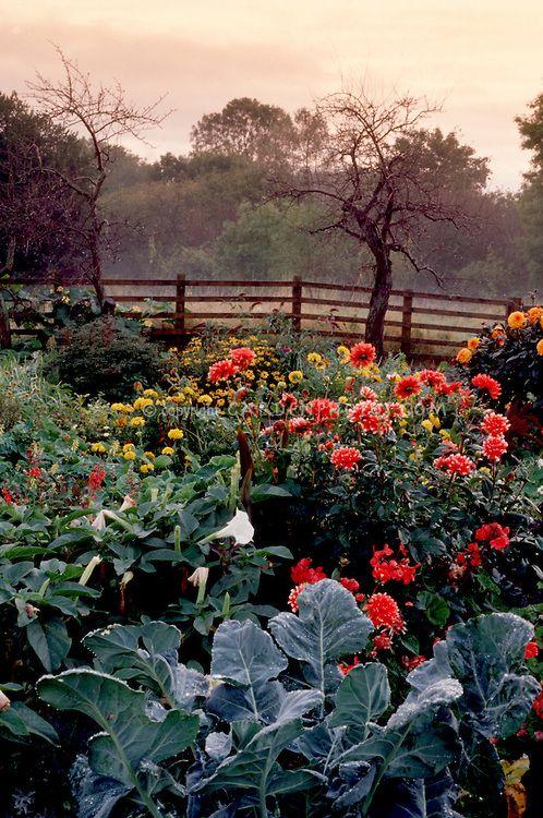 Autumn Garden Kale Datura Dahlias Fence Sky 400 x 300