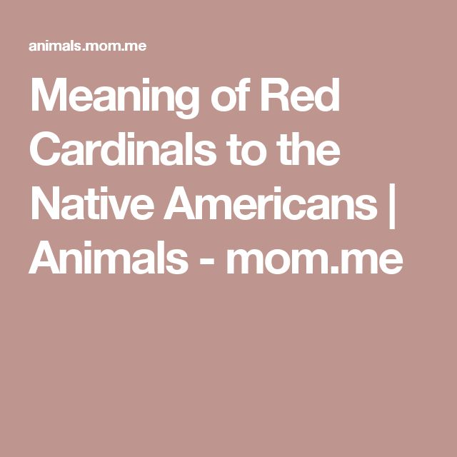 Meaning of Red Cardinals to the Native Americans | Animals - mom.me
