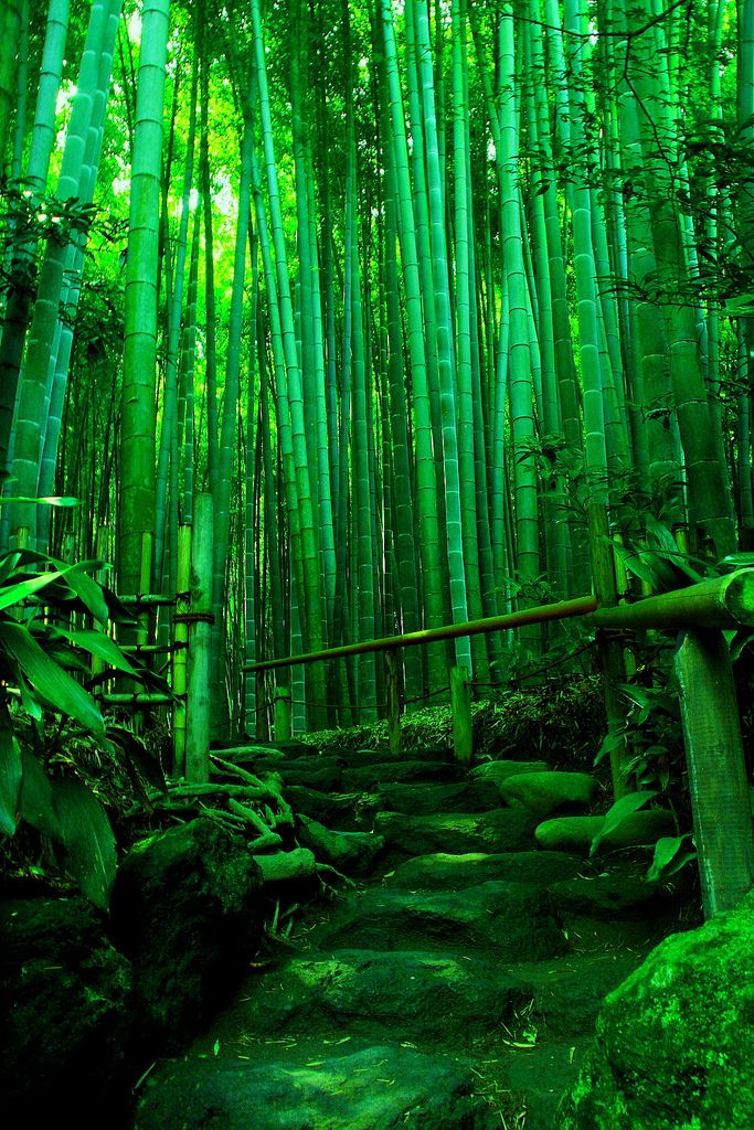 Stunning Nature Photography Collection 2 (10 Pictures) | Most Beautiful Pages. Bamboo