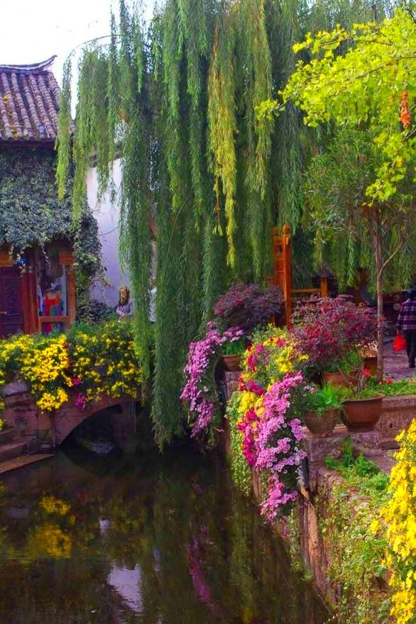 Weepingwillow, Hanging Plants, Weeping Willow, Flower Gardens, Places, Willow Bridges, Beautiful Gardens, China, Hanging Gardens