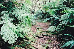 Outeniqua Hiking Trail, George, South Africa