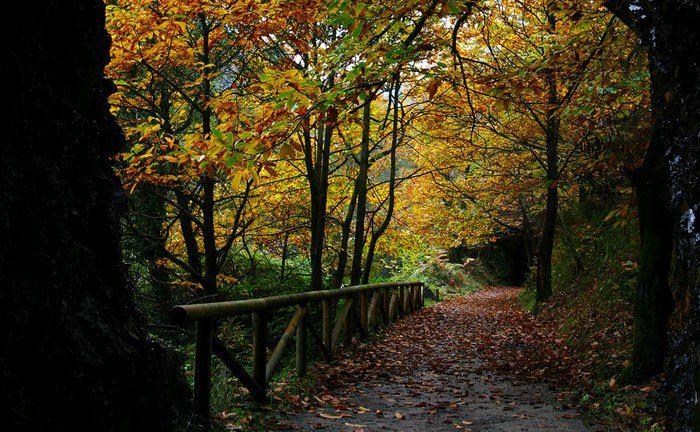 Senda del Oso en Asturias