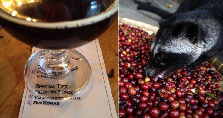 CIVET POOP COFFEE FANS: THERE'S NOW A CRAFT BEER BREWED WITH KOPI LUWAK Michigan's Perrin Brewing has unleashed a limited batch of Big Konas, brewed with civet coffee and Pacari chocolate.