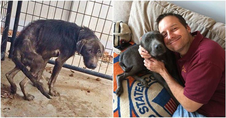 Ce chien maltraité avait peur des hommes, jusqu'à ce qu'il croise le chemin d'un homme qui lui a enfin montré ce qu'était l'amour