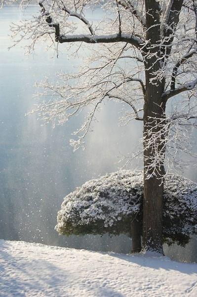 ✯ Winter's Light