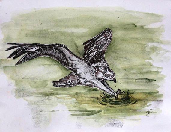ORIGINAL DRAWING. Osprey hunting fish