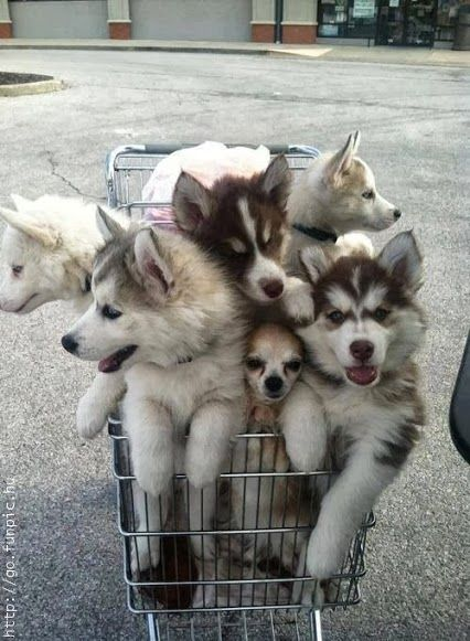 """We'll sit in the cart and look at """"Pawstar"""" mag while you put the good stuff on the bottom"""