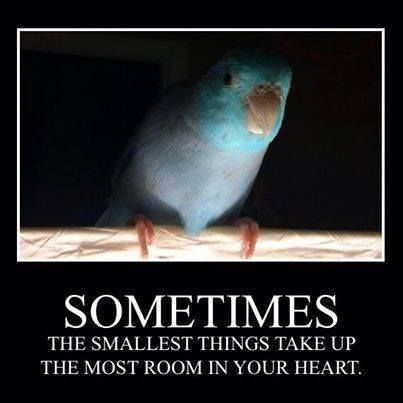 Quote from Winnie the Pooh. And so true of precious Parrotlets.