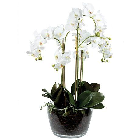 Foliage Phalaenopsis Orchid Large White Stem