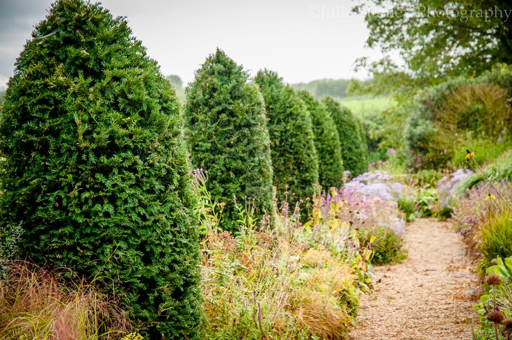 Creating Great Evergreen Structure in a Garden http://www.shopcheshire.co.uk/cheshire-blog/?aid=1247