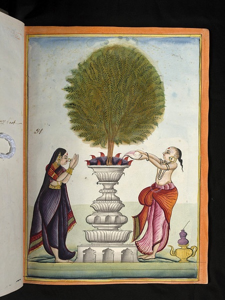 A Brahmin and his wife perform puja to a sacred Tulsi plant. There are lamps and water in a conch.1785