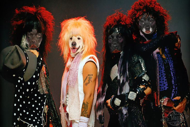Introducing Müttley Crüe for National Mutt Day! Show us your Rockstar mutts! #muttlife #nationalmuttday