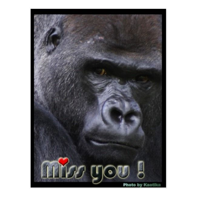 Miss You Gorilla Postcard Zazzle Com Gorilla Baby Monkey Pet Gorillas Art