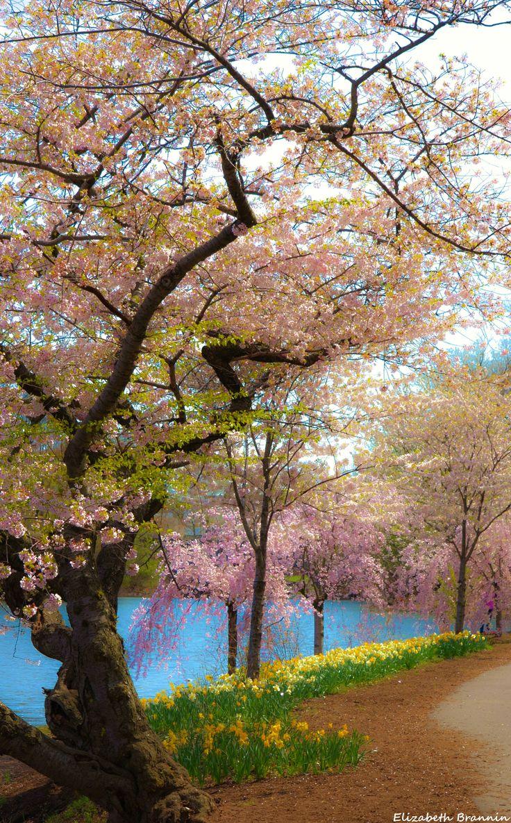 Newark New Jersey Branch Brook Park