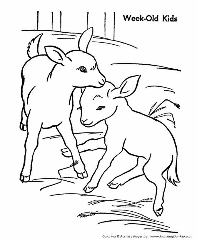 Farm animal coloring page Goat | Goat Kids